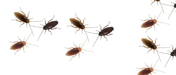 Antalya Hamam Böcekleri İlaçlama