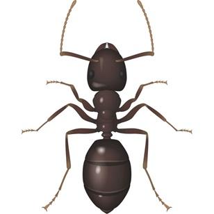 Antalya Karınca İlaçlama