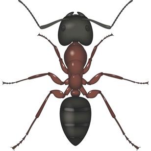 Antalya Mobilya Karıncası İlaçlama