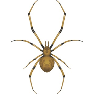 Antalya Örümcek İlaçlama